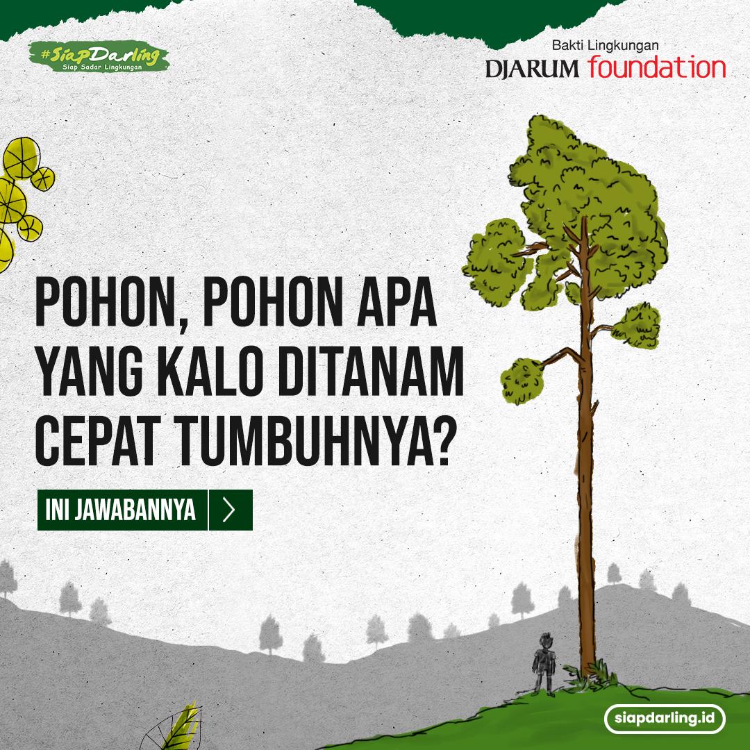 Ada Pohon Cepat Tumbuh, Pohon Apa Itu?